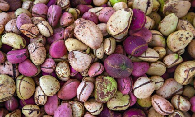 7 benefits of kola nuts